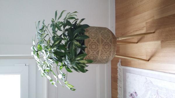 Support Pour Plantes Botanique taille M