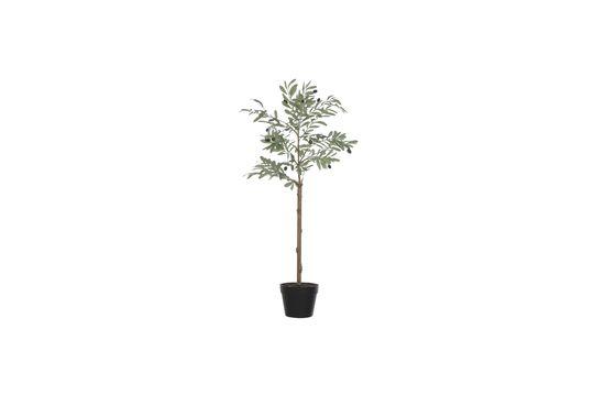 Plante artificielle Fépin Détouré